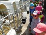 Exkurze kravín