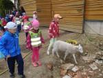 Exkurze ovčín